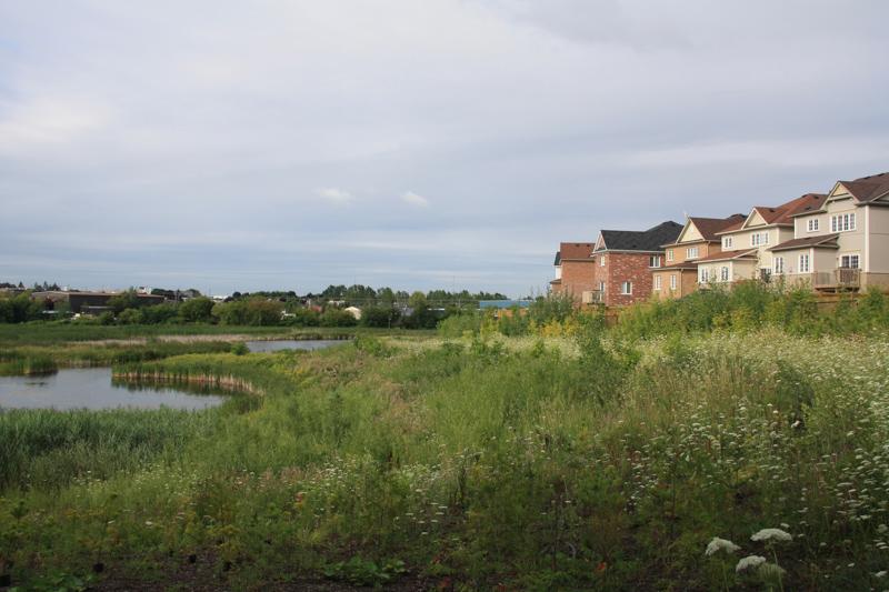 Nichol-Ave-2-Storm-Pond-Wetland-Livestakes