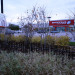 Whitetail-7-shoppers-drug-landscaping-serviceberry thumbnail