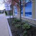 Whitetail-8-malus-crabapple-euonymus-landscape thumbnail